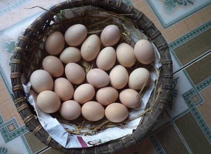 Trứng gà ta sạch tại Hà Nội được nhiều người tin dùng