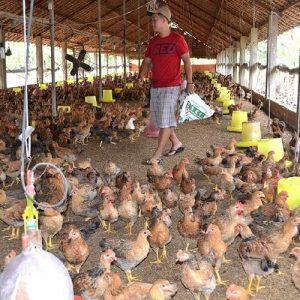 bán thịt gà sơn la 1