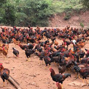 Một số địa điểm bán thịt gà ngon tại Ninh Bình